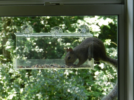 Squirrels evidently love birdseed, too!