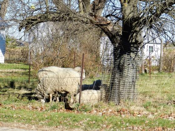 blog-swedesburg2